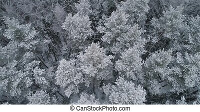 Winter landscape with forest. - Aerial view: winter forest....