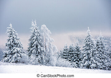 Winter landscape with frozen trees