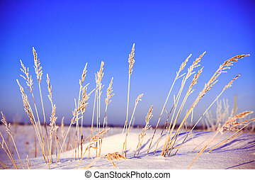 Winter landscape with grass
