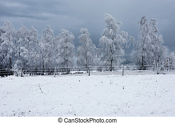 Winter landscape with hoarfrost on the trees