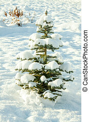 winter landscape with holiday new year and Christmas fir tree