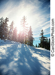 Winter landscape with lens flare