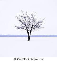 Winter landscape with lonely tree in mist time