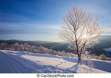 Winter landscape with lots of snow and trees