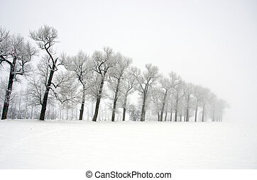 winter landscape with old road tree alley and mist