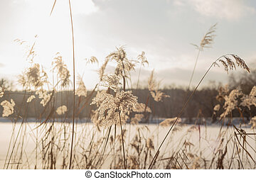 Winter landscape with pampass grass by the lake against cloudy sky