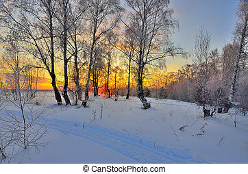 Winter landscape with red sunset in a snowy birch forest
