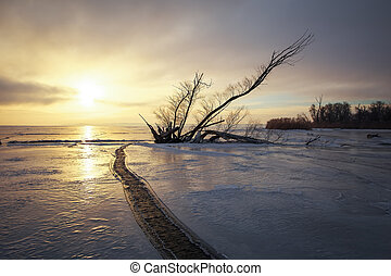 Winter landscape with snag on the frozen lake near the shore