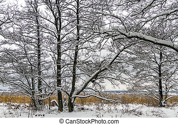 Winter landscape with snow, alder trees and common reed in Norway, Fredrikstad Ora Nature Reserve.