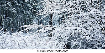 Winter landscape with snow covered trees and blue sky.