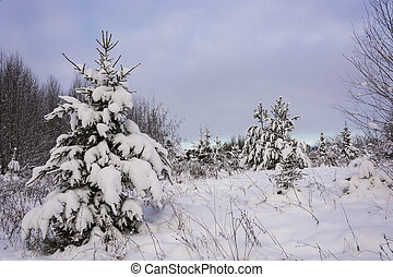 Winter landscape with snow-covered trees on a frosty...