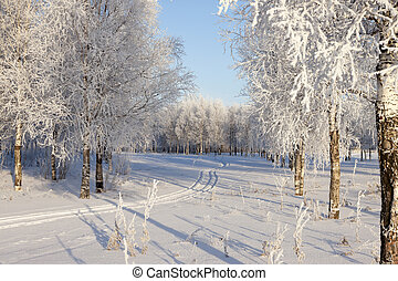 Winter landscape with snow covered trees .