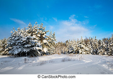 Winter landscape with snow in wood