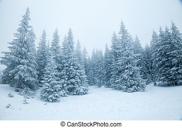 Winter landscape with snowy fir forest