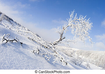Winter landscape with snowy tree