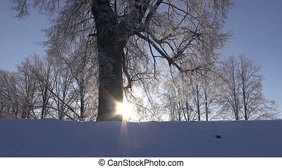 winter landscape with sun and tree