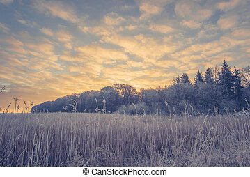 Winter landscape with trees and a sunrise