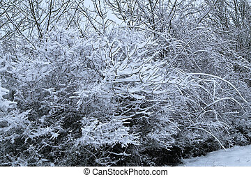 Winter landscape with trees covered in white snow
