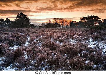 winter, landschaft, beschwingt, aus, schneelandschaft, bedeckt, sonnenaufgang