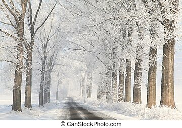 Winter lane on a foggy morning - Winter lane between the...