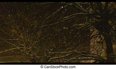 Winter Lanterns in Old Town