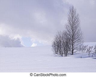winter., leafless, árvores