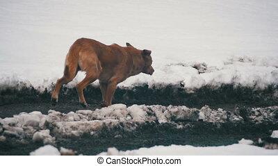 winter., lent, neigeux, chien, gris, mouvement, courant, rue, sdf