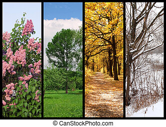 winter, lente, collage, herfst, bomen, quatres saisons,...