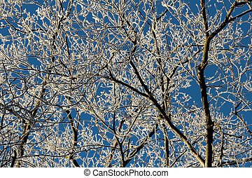Winter light - frosty trees on a cold sunny winter day