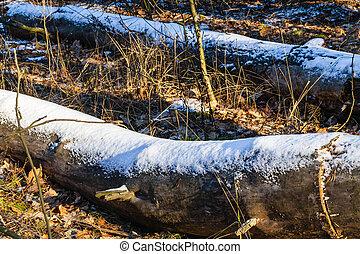 Winter logs closeup