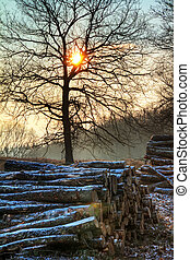 Early, cold winter morning at the Posbank in the Netherlands with a rising sun and piles of logs. HDR