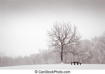 Winter meadow with lonely oak tree