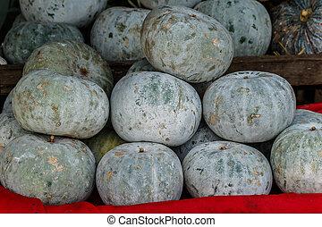 Winter Melon, White Gourd, Winter Gourd, Ash Gourd,Benincasa hispida