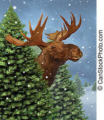 Winter Moose - Winter moose hiding behind a group of...