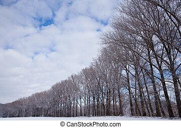 winter, morgen