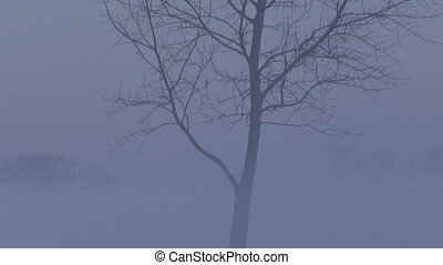winter morning fog - landscape with lonely tree in dark...