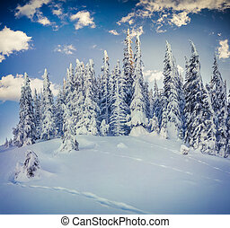 Winter morning in the mountain forest.