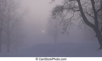 winter morning sun in fog - winter morning sun in dark fog...