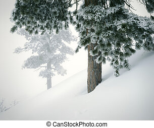 Winter Mountain Landscape with Fresh Snow and Pines. Great...