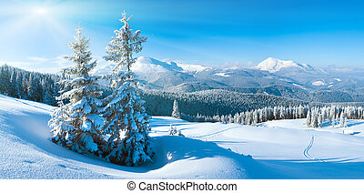 Morning winter calm mountain landscape with fir trees on slope (Goverla and Petros Mount view, Carpathian, Ukraine). Three shots stitch image.