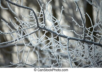 winter- natur
