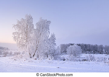 Winter nature landscape. Hoarfrost on trees. Snowy plants. Christmas background