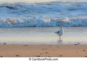 Winter nature on the coast. White gull standing on the shore.