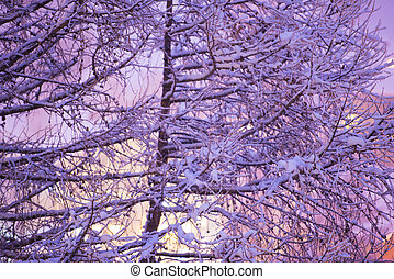 tree branches covered with fresh snow