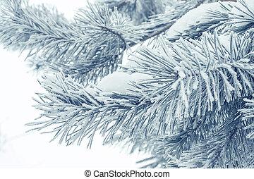winter needles closeup