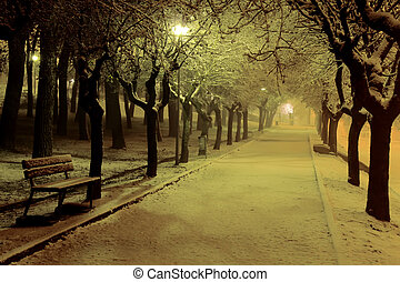 Winter night in the park - The first winter snow on Pionta ...