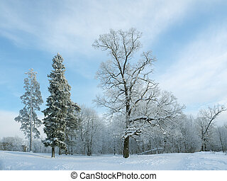 Winter Northern city landscape. Trees in the snow.