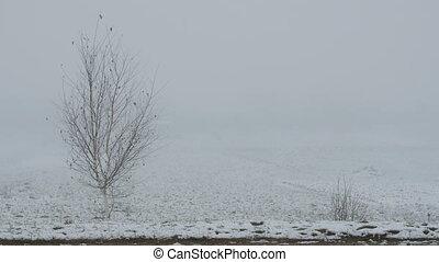 winter., nu, brouillard, arbre, seul