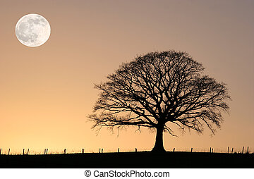 Oak tree in winter at sunset in sillouette against a golden sky with a full moon.