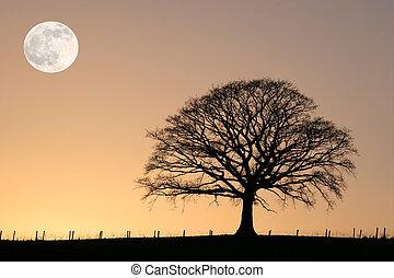 Winter Oak and Full Moon - Oak tree in winter at sunset in...
